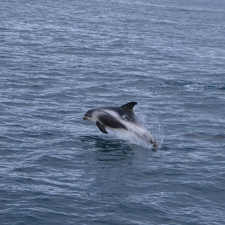whale watching Olafsvik