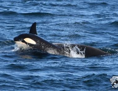 Whale Watching Island Juni
