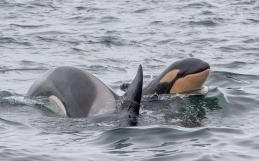 Walbeobachtung Island – Wale in Island – Tipps für Whale Watching in Island