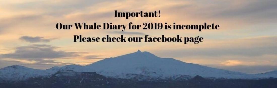 Whale Diaries 2019