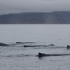 holmavik whale watching september