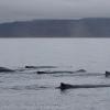 holmavik whale watching september