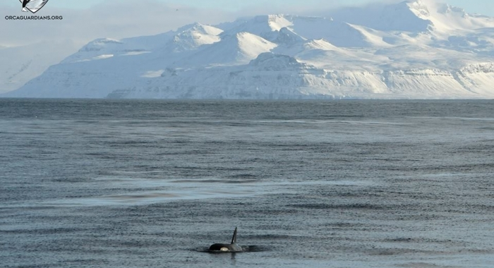 iceland whale watching february