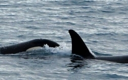 Whale Watching Iceland February 13, 2019