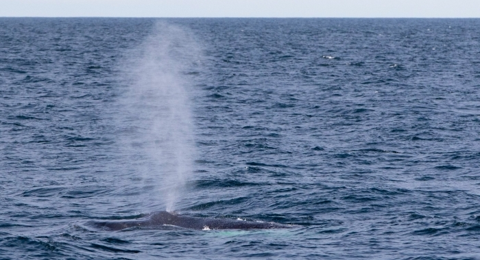 iceland whale watching september