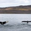 laki tours whale watching september