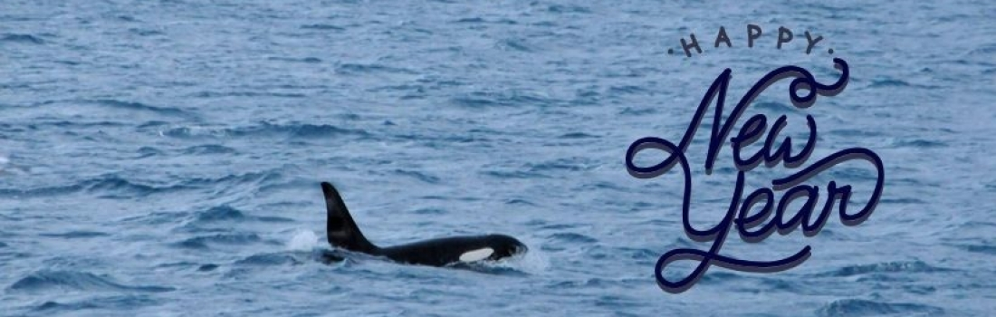 New Year in Iceland – Welcome 2019 with ORCAS