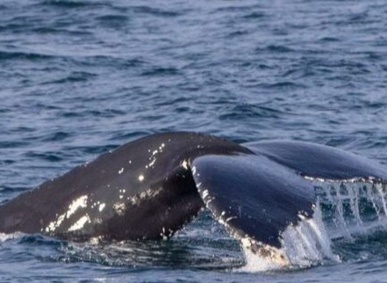 Snaefellsnes Whale Watching September 26, 2019