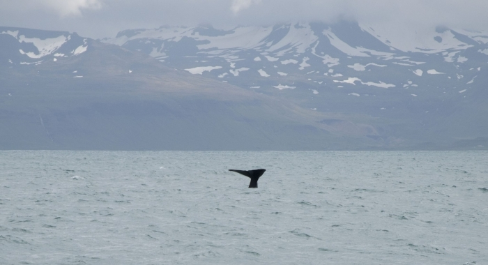 sperm whale fluke and mountains